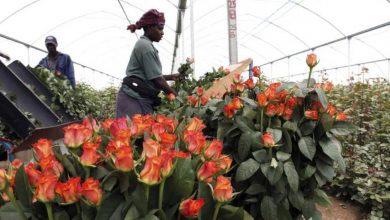 Horticulture, Kenya