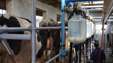 Dairy, Kenya