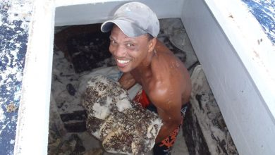 Photo of Seychelles Fishing Authority Reduces Length of Sea Cucumber Season to 8 Months