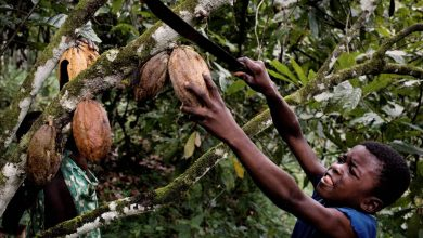 Photo of Nestle, Cargill again face suit by ex-slaves in cocoa fields