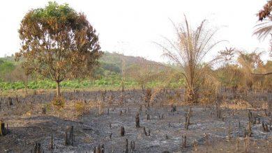 Wildfires, Heat