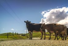 Livestock Contracts