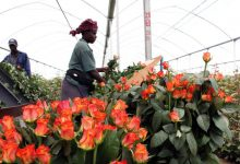 Flower Exports