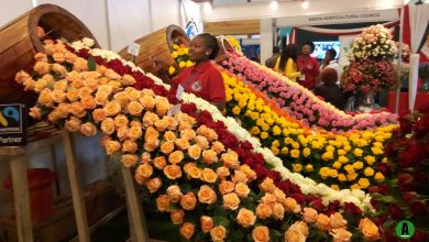 Photo of Horticulture nets Sh127 billion in 10 months