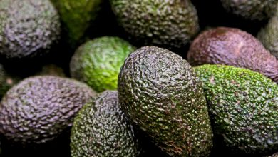 Photo of Tanzania targets China's $105 million avocado market