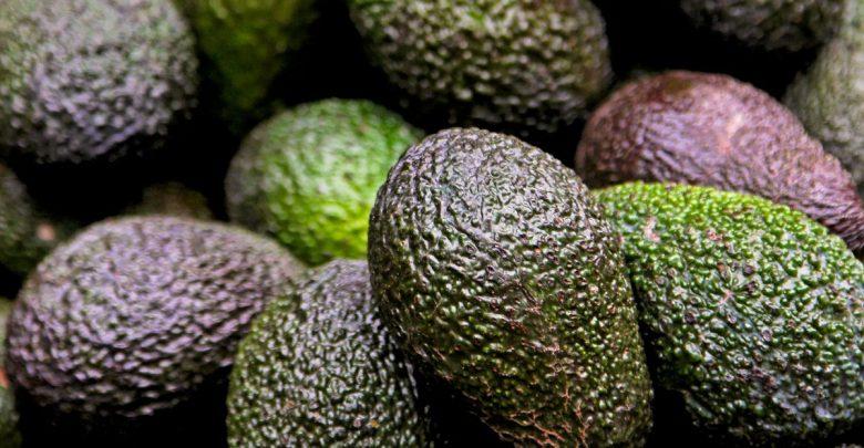 Photo of Kenya named among Africa's top avocado exporters