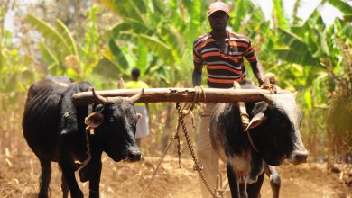 Photo of Ugandan government woos investors to invest in livestock sector value chain