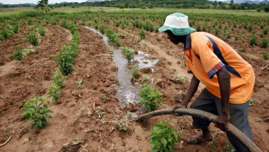 Photo of Poor rainfall impacts Namibia's agricultural production