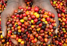 Photo of Burundi to nationalize coffee industry to boost farmers' income