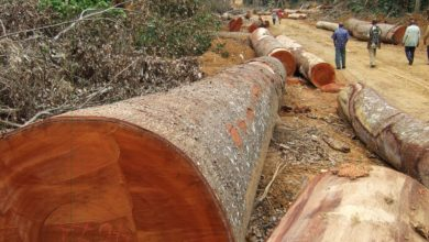 Photo of As Zimbabwe's forests fall, timber shortage tightens screws on carpenters