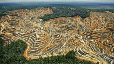 Photo of Greenpeace says agriculture to blitz forests the size of Spain
