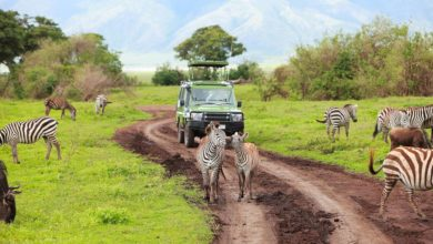 Photo of Tanzania shines in wildlife protection drive