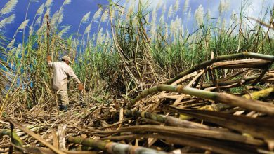 Photo of South Africa's Tongaat to sell eSwatini sugarcane farm for $21 million