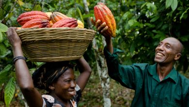 Photo of Domestic Ivorian cocoa exporters competing with multinationals fear bankruptcy