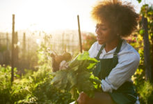 Photo of Become a farming entrepreneur in South Africa – What type of farmer are you?