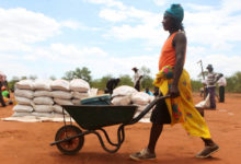 Photo of Zimbabwe declares disaster over drought as crop output drops