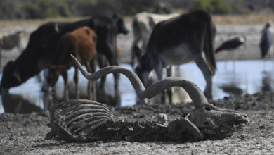 Photo of Years of drought threaten South Africa's wildlife industry
