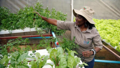 Photo of In Zimbabwe, a backyard hydroponic farm beats drought to grow vegetables
