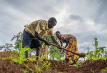Photo of Irish govt gives Nasfam €300 000 grant to boost Malawi farmers commercialisation drive