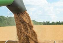 Wheat Farming