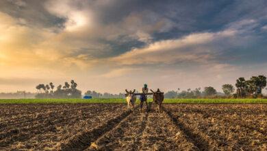 India Farming